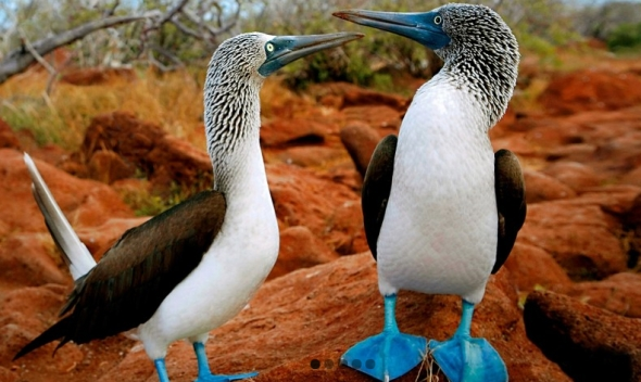 Hoy en día estas islas aún son básicas para estudiar la evolución. Fuente: Ecuador Mágico.