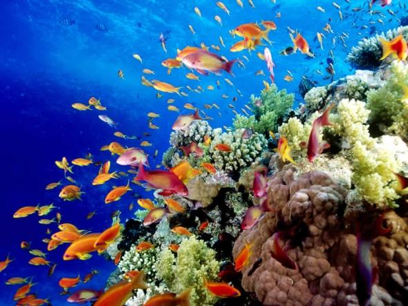 La Gran Barrera de Coral es mucho más grande que dos Italias. Fuente:  Cool Facts for Kids.